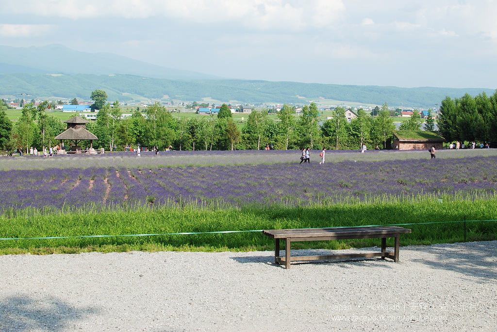 《北海道自駕遊》富良野富田農場,夏日裡繁花組成的絕美花田。