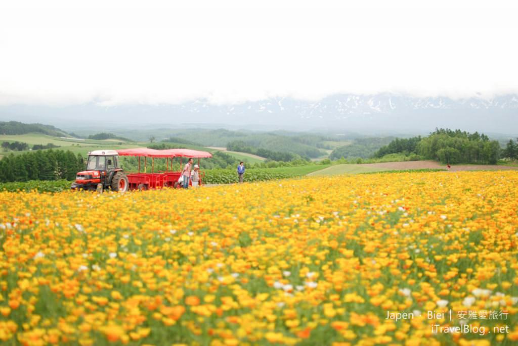 《北海道自駕遊》美瑛四季彩之丘:早春的多彩花田初綻放。(上)