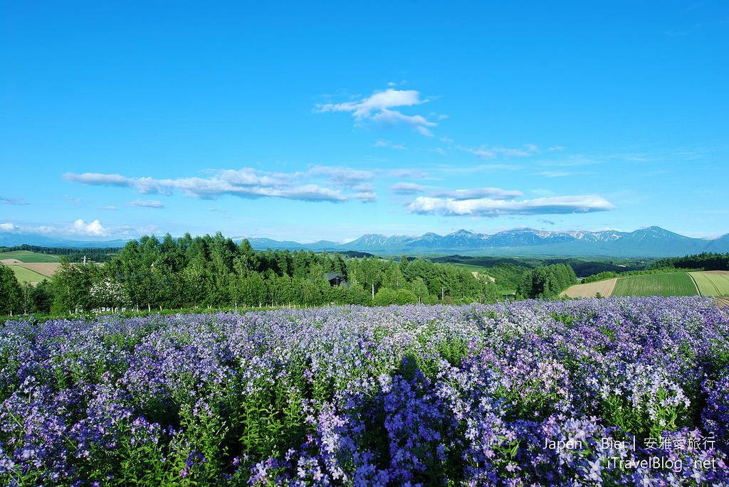 《北海道自駕遊》美瑛四季彩之丘:遠眺十勝連峰與藍天的遼闊花田。(下)