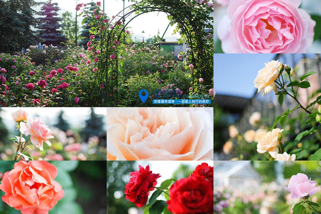 《札幌景點推薦》北海道札幌白色戀人公園之四,春天玫瑰花園朵朵綻放!
