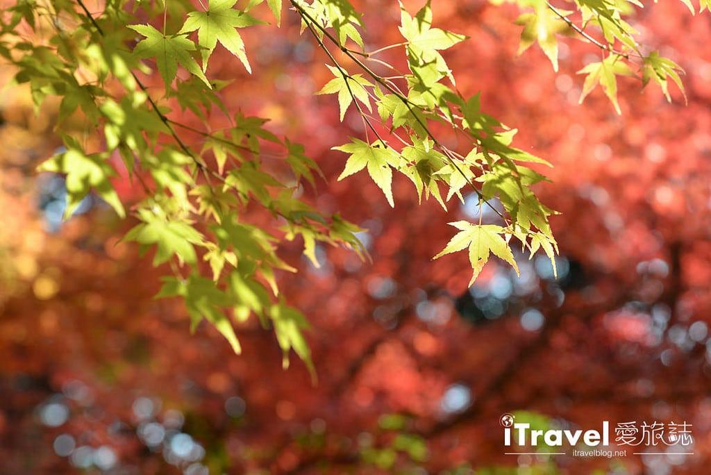 《京都賞楓景點》嵐山常寂光寺:楓華正茂引絡繹不絕觀賞人潮,值得二訪的名所。