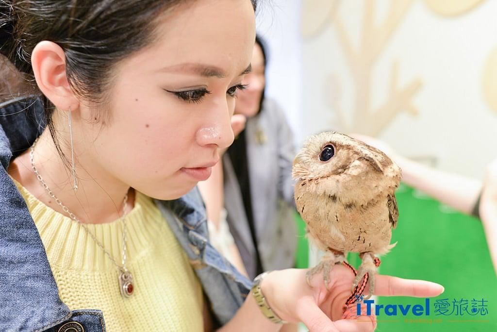 《福岡景點推薦》OWL Family 貓頭鷹咖啡店:教你線上預訂與萌萌小傢伙的約會。