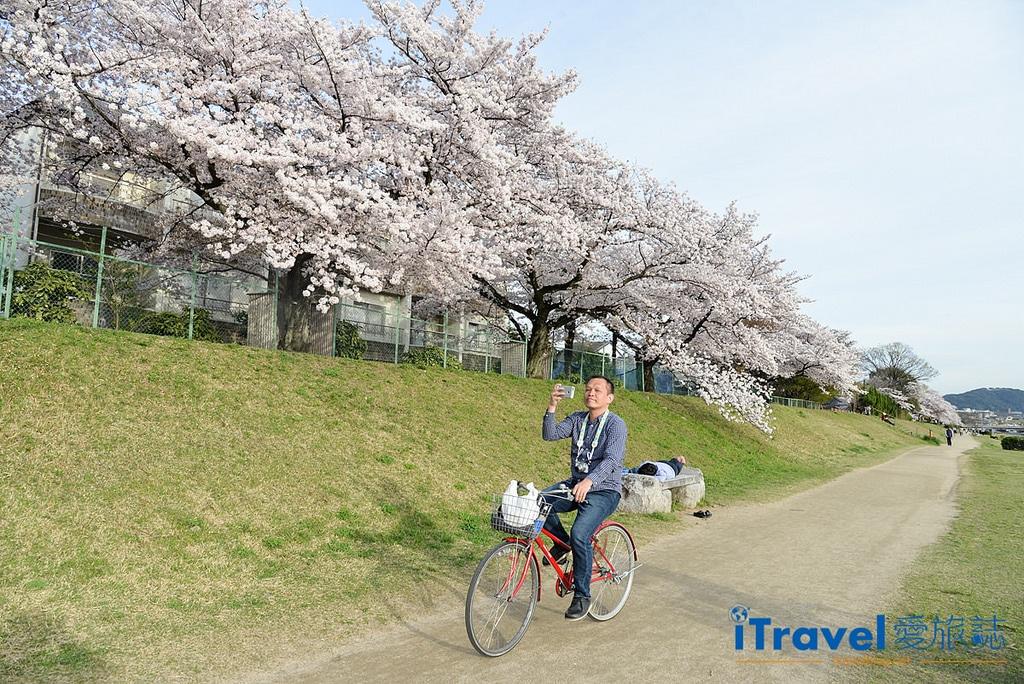 《京都租腳踏車實錄》Rent a cycle EMUSICA 平價實惠車行,輕鬆騎乘玩賞鴨川櫻花。